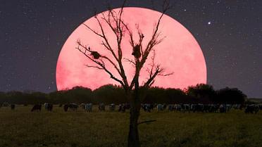 moon-night-supermoon-trees-2234731-1.jpg